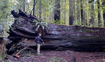 Jarrett in Redwood Forest